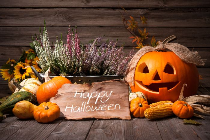 37738124 - halloween still life with pumpkins and halloween holiday text