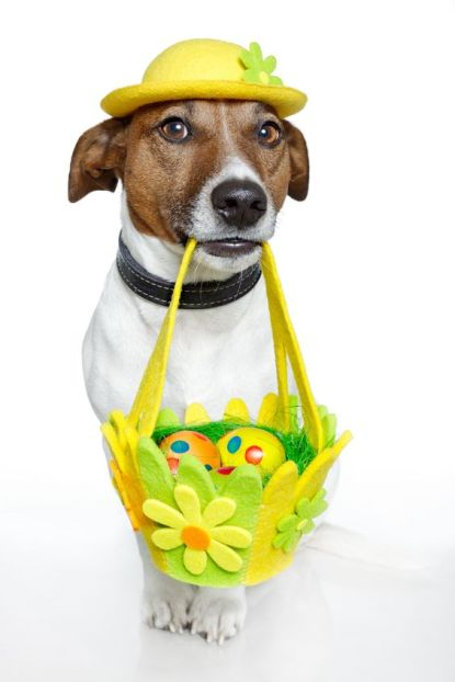 12470942 - dog holding easter basket with colorful eggs