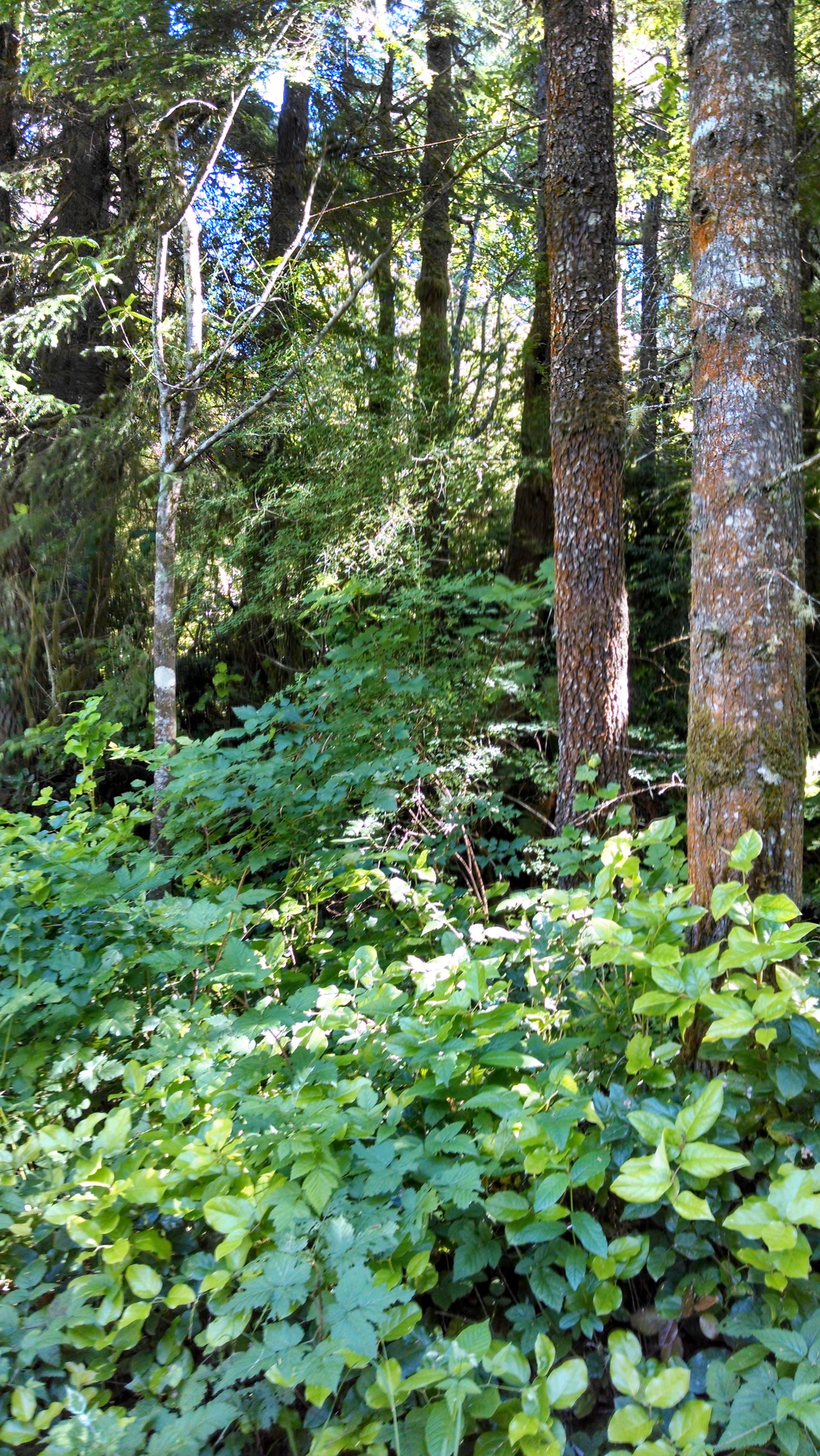 Trees 61814